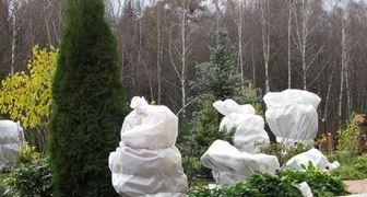 Харитонов день - укрываем деревья, высаживаем черенки роз и винограда